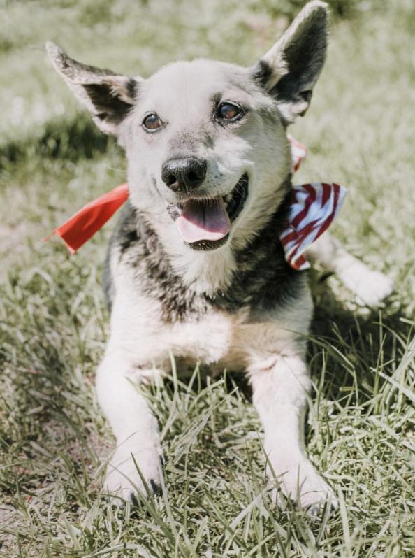 Polska młodzież nagrała wzruszającą piosenkę, aby pomóc starszym psom ze schroniska