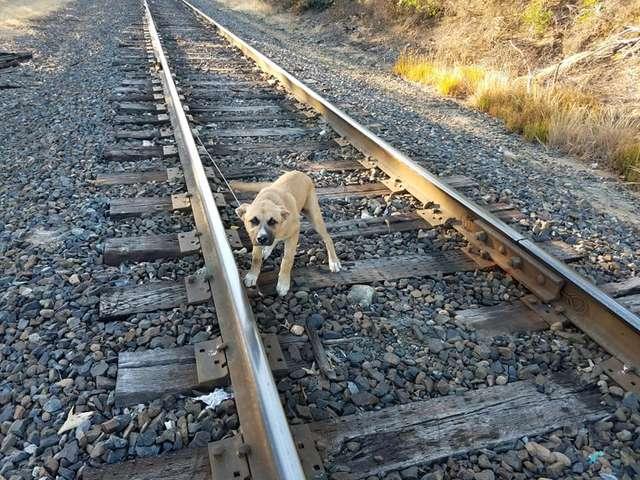 Znalazł psa przywiązanego do torów kolejowych. Pociąg mógł nadjechać w każdej chwili