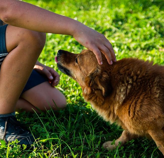 Psy potrafią rozpoznawać złych ludzi. W tej kwestii rzadko się mylą