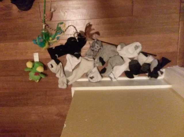 Kotka nie chciała opuścić łóżka umierającej właścicielki. Była przy niej do samego końca