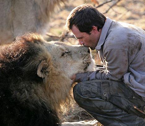 Po 7 latach lwica spotyka mężczyznę, który ją uratował. Zwierzak natychmiast się na niego rzuca
