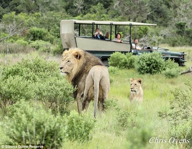 Kłusownicy włamali się do rezerwatu, aby zabić nosorożce. Wszyscy zostali zjedzeni przez lwy