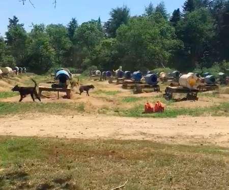 200 psów w szczerym polu. Całe dnie spędzają na łańcuchu, a ich budy to plastikowe beczki