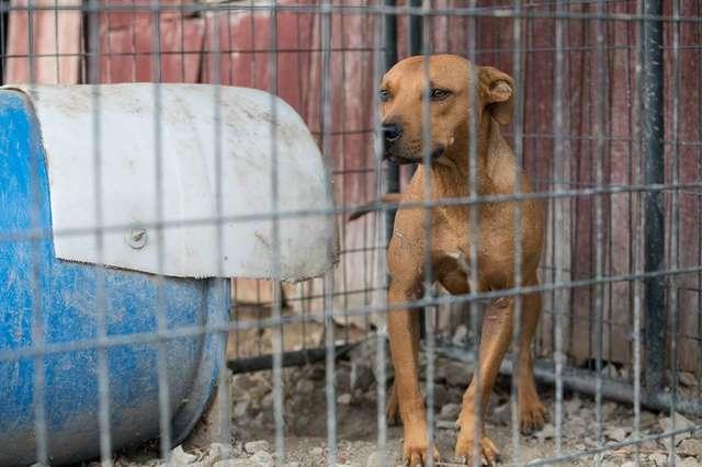 Psy wykorzystywane do nielegalnych walk były niezwykle szczęśliwe, gdy zobaczyły ratowników