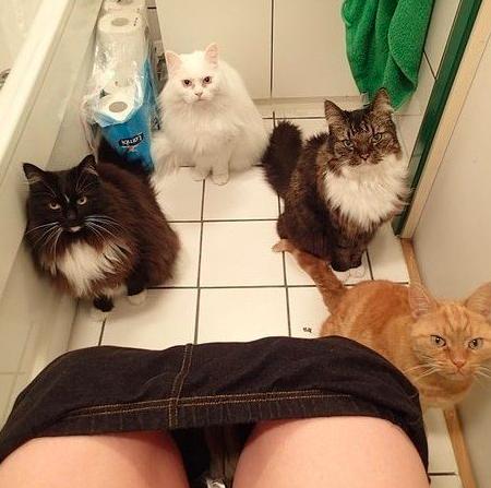 20 rzeczy, które zrozumieją jedynie właściciele kotów