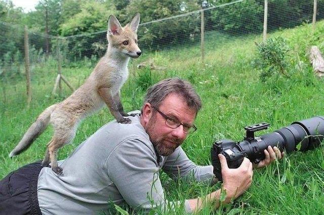 Zwierzaki przeszkadzające fotografom dzikiej przyrody to nasza nowa ulubiona rzecz