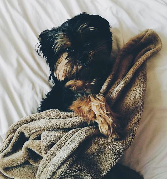 Spanie z psem w jednym łóżku jest korzystne dla zdrowia. Istnieje aż 7 zalet