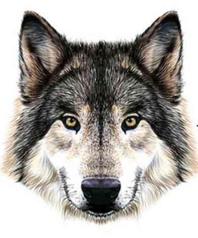 Pierwsze zwierzę, jakie zobaczysz na tym obrazku, mówi wiele o Twojej osobowości