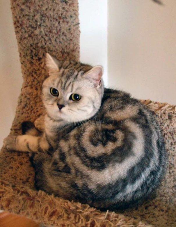 30 kotów, którym Matka Natura podarowała wyjątkowe umaszczenie