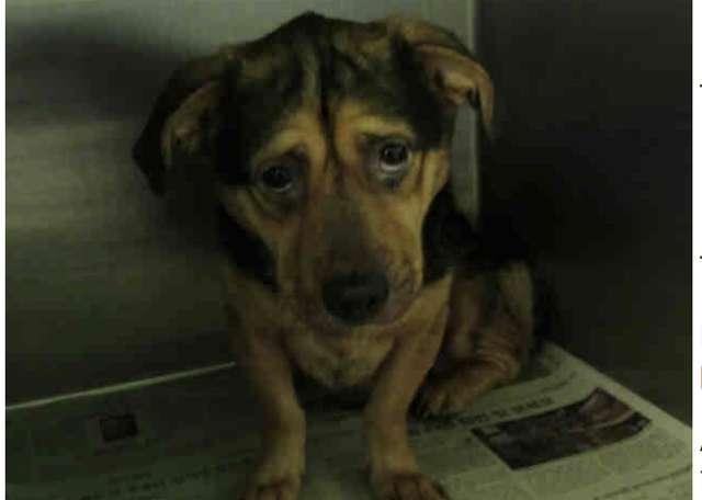 Chcieli adoptować najsmutniejszego psa w schronisku. Wszyscy zaczęli ich przed nim ostrzegać