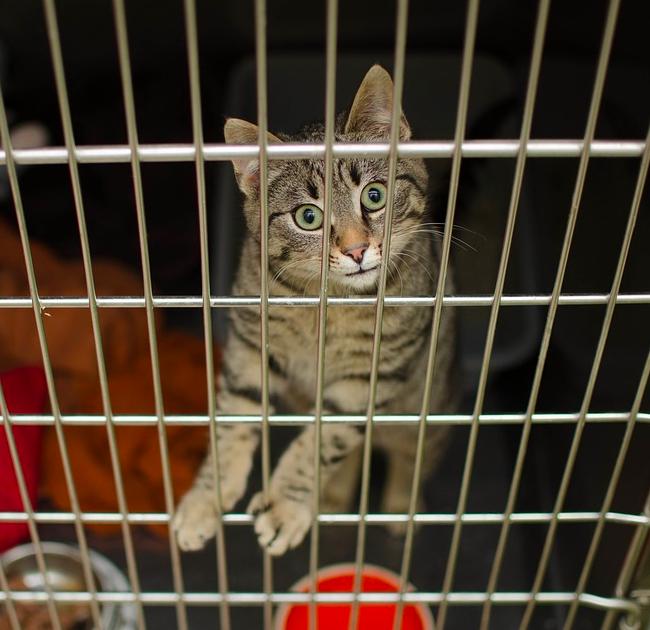 Schronisko mroziło na śmierć żywe kocięta. W ten sposób zwierzaki były poddawane eutanazji