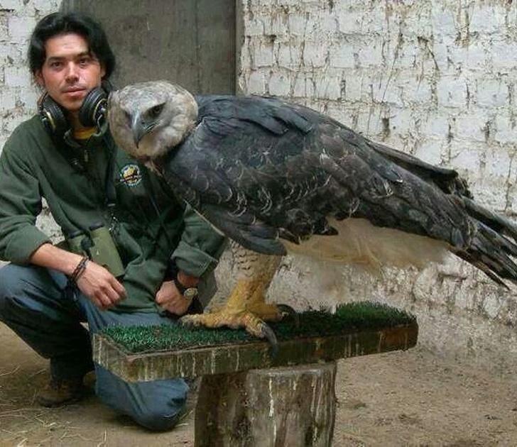 19 ogromnych zwierząt, które imponują rozmiarem. Ciężko uwierzyć, że są prawdziwe