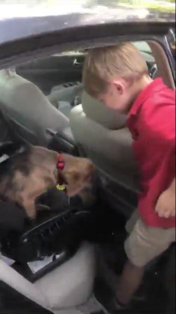 Tata uchwycił pierwsze spotkanie syna z psem zaadoptowanym ze schroniska