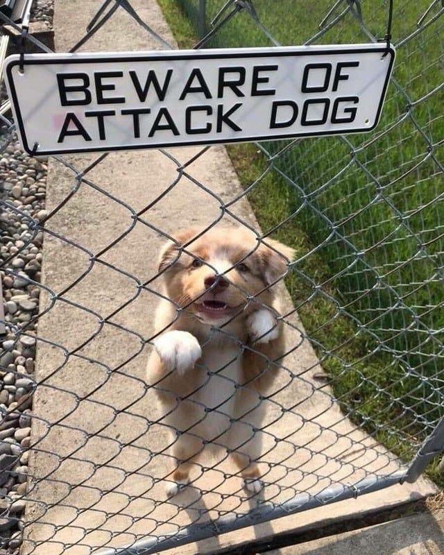 Najsłodsze psie pyszczki. Na ich widok serce samo się rozpływa