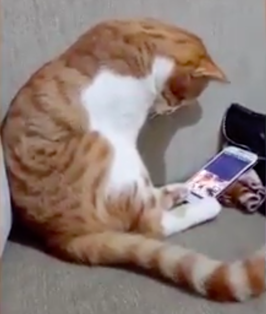 Kot ujrzał w telefonie opiekuna, który zmarł lata temu. Jego reakcja poruszyła miliony ludzi