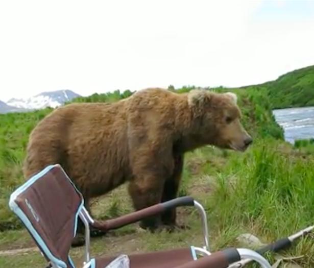 Odpoczywający przy rzece mężczyzna był przerażony, gdy wielki niedźwiedź usiadł tuż obok niego