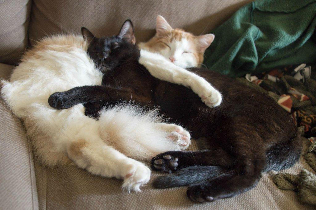 Właściciel kota to idealny partner. Mamy 21 niezaprzeczalnych dowodów