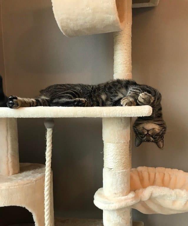 22 zdjęcia, które udowadniają, że wszystkie koty tak naprawdę są cieczą