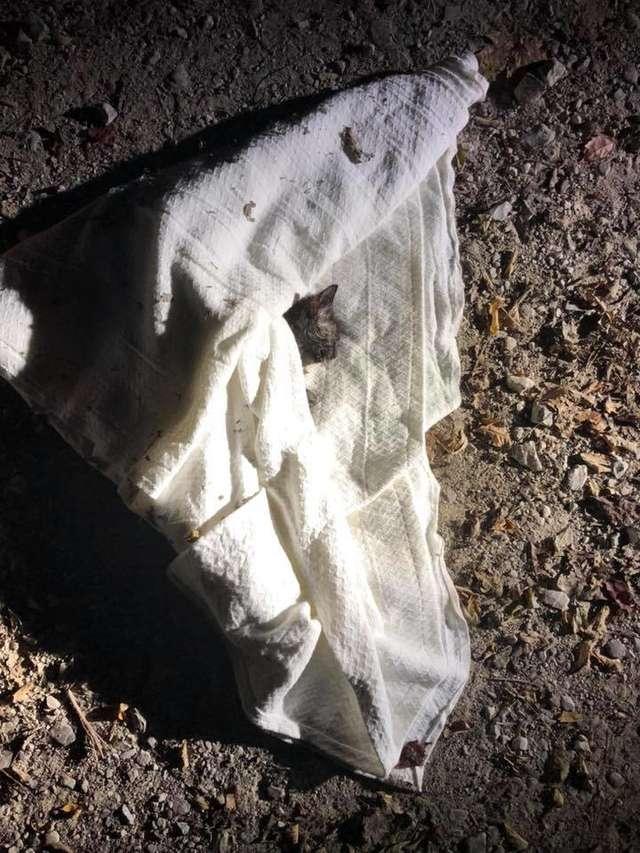 Worek na śmieci wyrzucony w parku. W środku znajdowało się maleńkie stworzenie