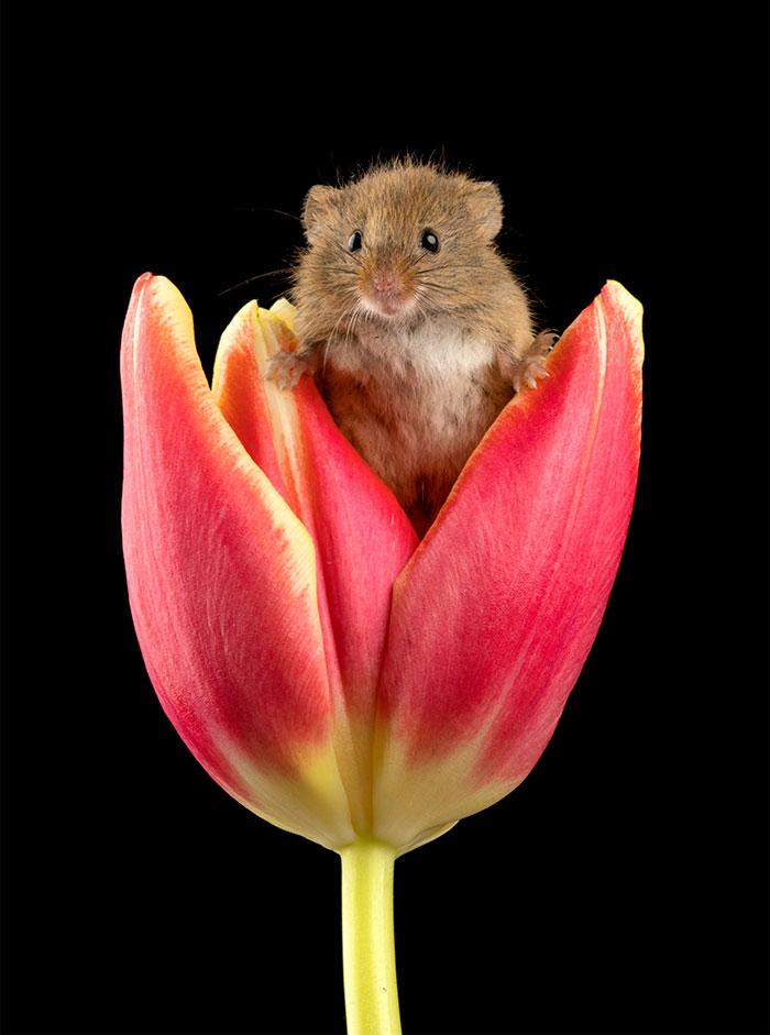 Przedarł się przez kwiaty, aby uchwycić piękno malutkiego ssaka. Zdjęcia rozjaśnią twój dzień