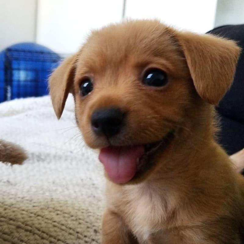 16 szczeniaków, które są tak słodkie, że od razu będziesz chciał wysłać ich zdjęcia znajomym