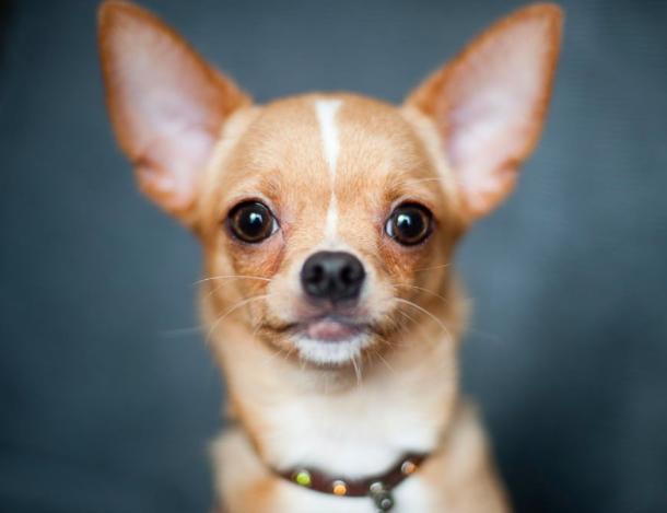 16 najwierniejszych ras psów według psychologa zwierzęcego