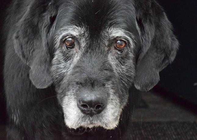 Poruszające słowa wyjaśniające, dlaczego psy żyją znacznie krócej niż ludzie