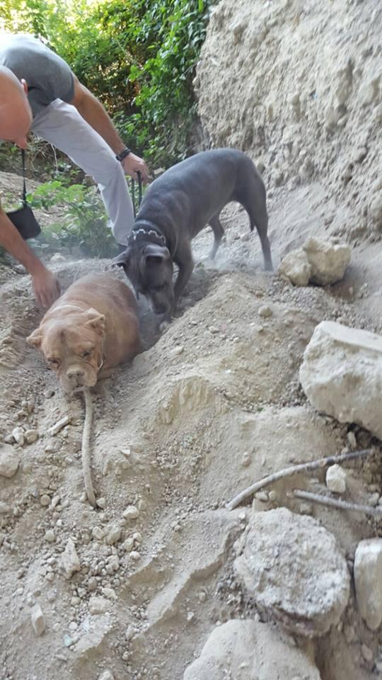 W trakcie spaceru dokonał strasznego odkrycia. Ktoś chciał pozbyć się psa w okrtny sposób