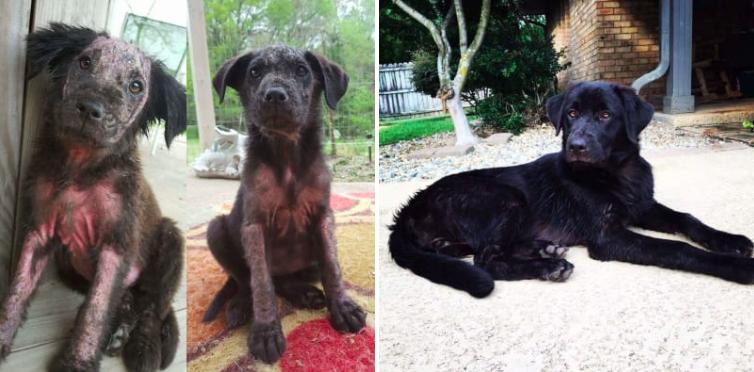 20 zdjęć psów PRZED i PO uratowaniu. One przywracają wiarę w ludzkość!