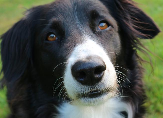 Ranking 10 ras psów, które zazwyczaj cieszą się dobrym zdrowiem