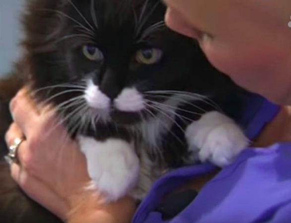 Kotka w porę ostrzega właścicielkę przed niebezpieczną chorobą. Uratowała kobiecie życie