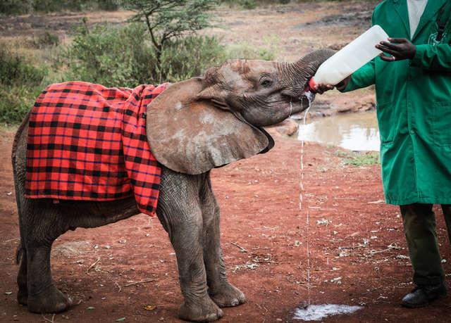 Słonie zebrały się wokół sieroty i otoczyły ją. Te zwierzaki nigdy nie przestają zadziwiać
