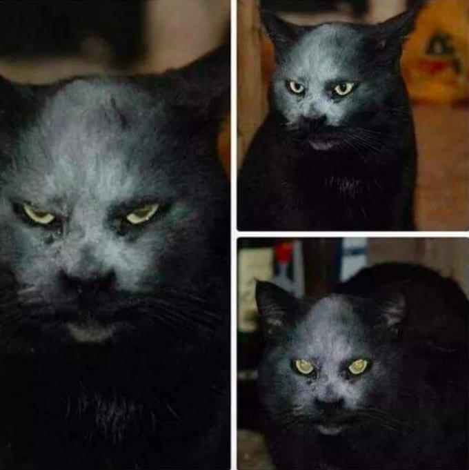 30 kotów, które swoim zachowaniem przeszły same siebie. Brak słów!