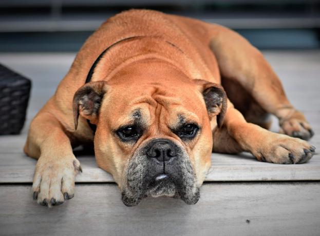 12 rzeczy, za którymi psy często nie przepadają