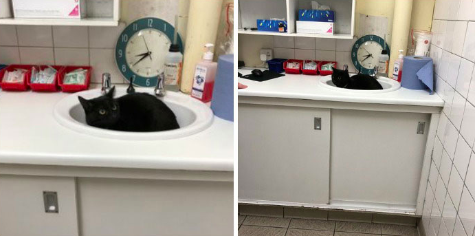 27 zabawnych kotów próbujących ukryć się przed weterynarzem