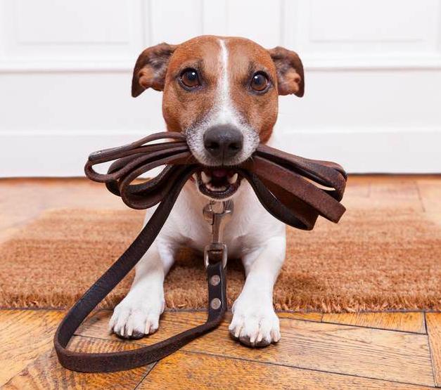 10 oznak, które świadczą, że jesteś szalonym psim rodzicem
