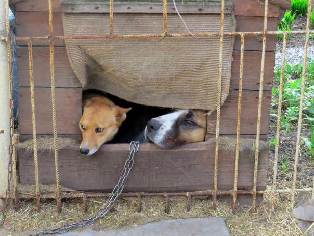 Oto co należy zrobić, gdy jest się świadkiem znęcania nad zwierzętami