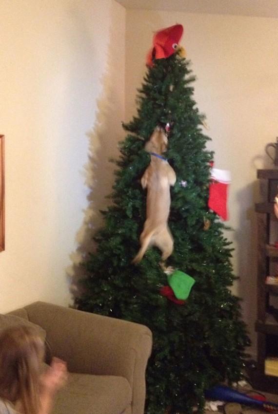 12 zabawnych psów, które całkowicie zrujnowały Święta. Zero skrupułów!