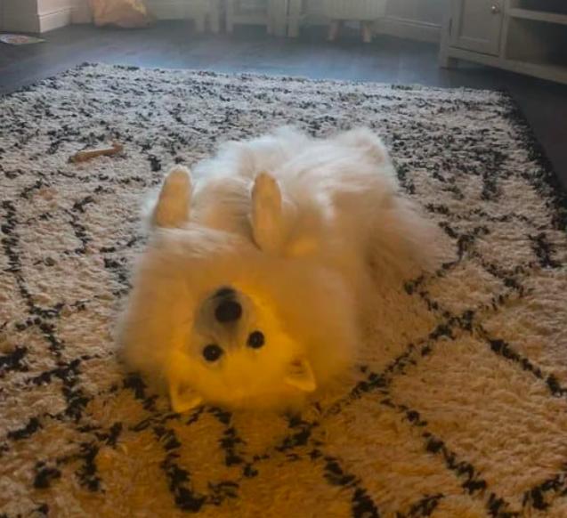 """17 dziwnych zdjęć psów, które sprawią, że krzykniesz: """"CO JEST?!"""""""