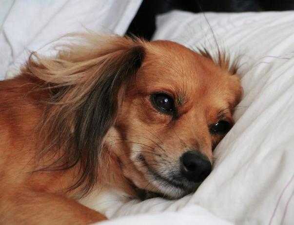 12 rzeczy, za którymi nie przepada Twój pies. Będzie wdzięczny, jeśli zapamiętasz tę listę