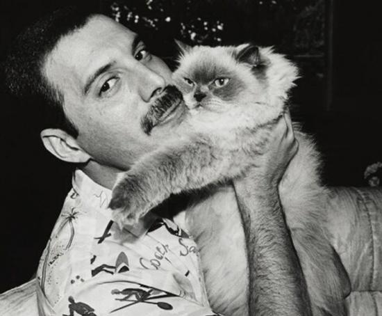 Freddie Mercury – wszyscy dobrze go znają. Nie każdy wie jednak, że był wielkim fanem kotów