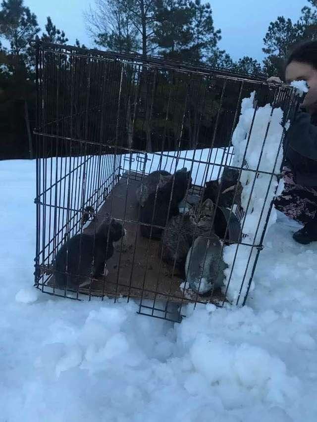 Klatka wyrzucona na mróz i śnieg. W środku uwięziono przerażone kotki