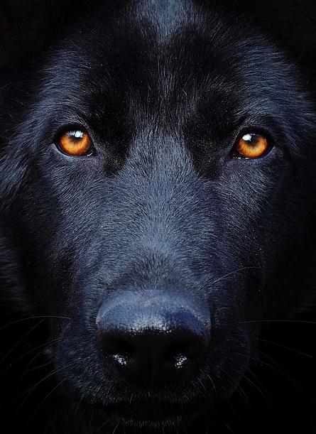 4 fakty o psim wzroku, o których większość ludzi nie ma pojęcia
