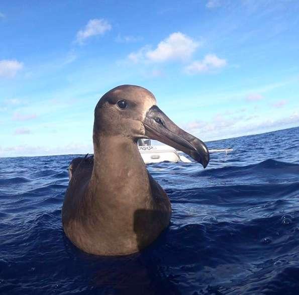 Na środku oceanu dostrzegł rzadkiego ptaka, a potem zauważył, co je