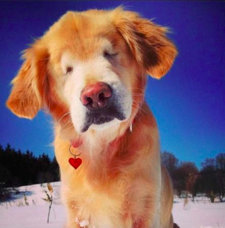 Starszy i niewidomy pies bawi się na śniegu. Filmik roztopi nawet najzimniejsze serce
