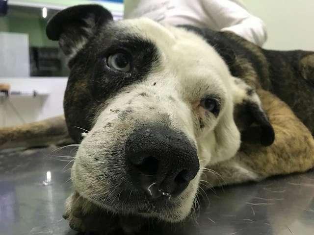 Bezdomny pies miał dziwnie przechyloną głowę. Ratowników bardzo to zaniepokoiło