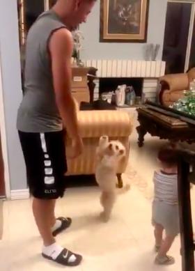 Tata podrzuca dziecko, a wszystko obserwuje pies. Reakcja czworonoga jest nie do przebicia!