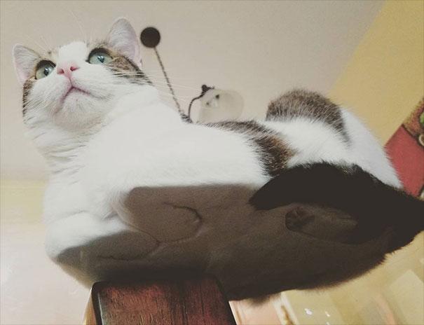 Zdjęcia pokazują świat kotów z zupełnie innej strony. Wykorzystano do tego szklany stół
