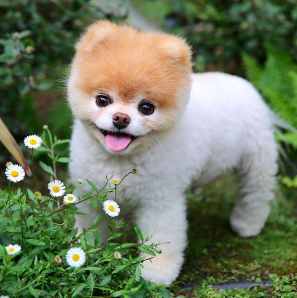 Zmarł najsłodszy pies świata. Odszedł w wieku 12 lat