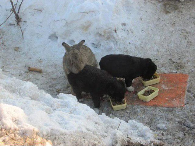 Królik uratował dwa porzucone szczeniaki. Zaopiekował się nimi jak własnymi dziećmi